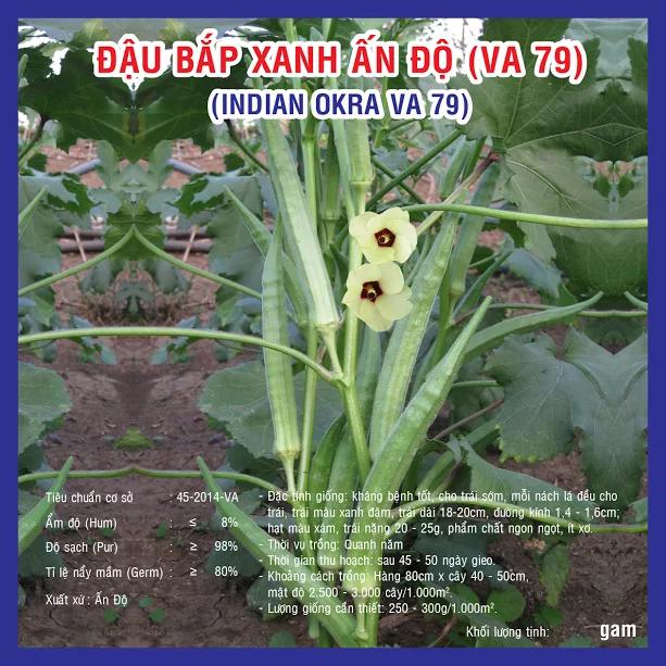Kĩ thuật trồng đậu bắp xanh