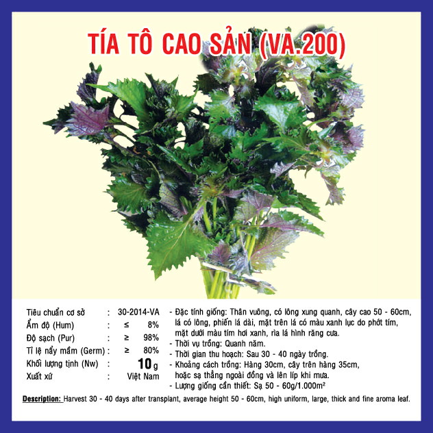 Kĩ thuật trồng tía tô