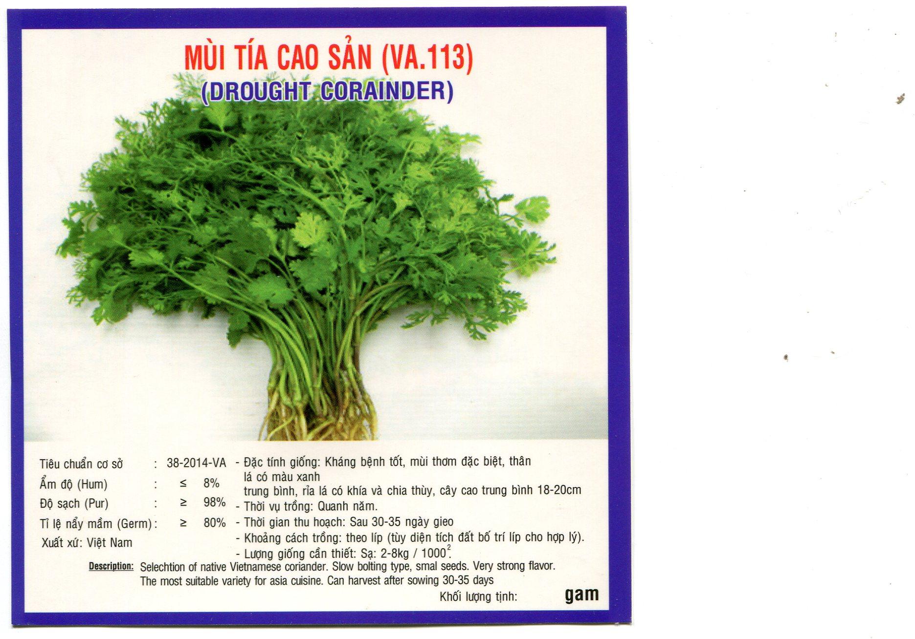 Kĩ thuật trồng rau ngò rí (rau mùi)