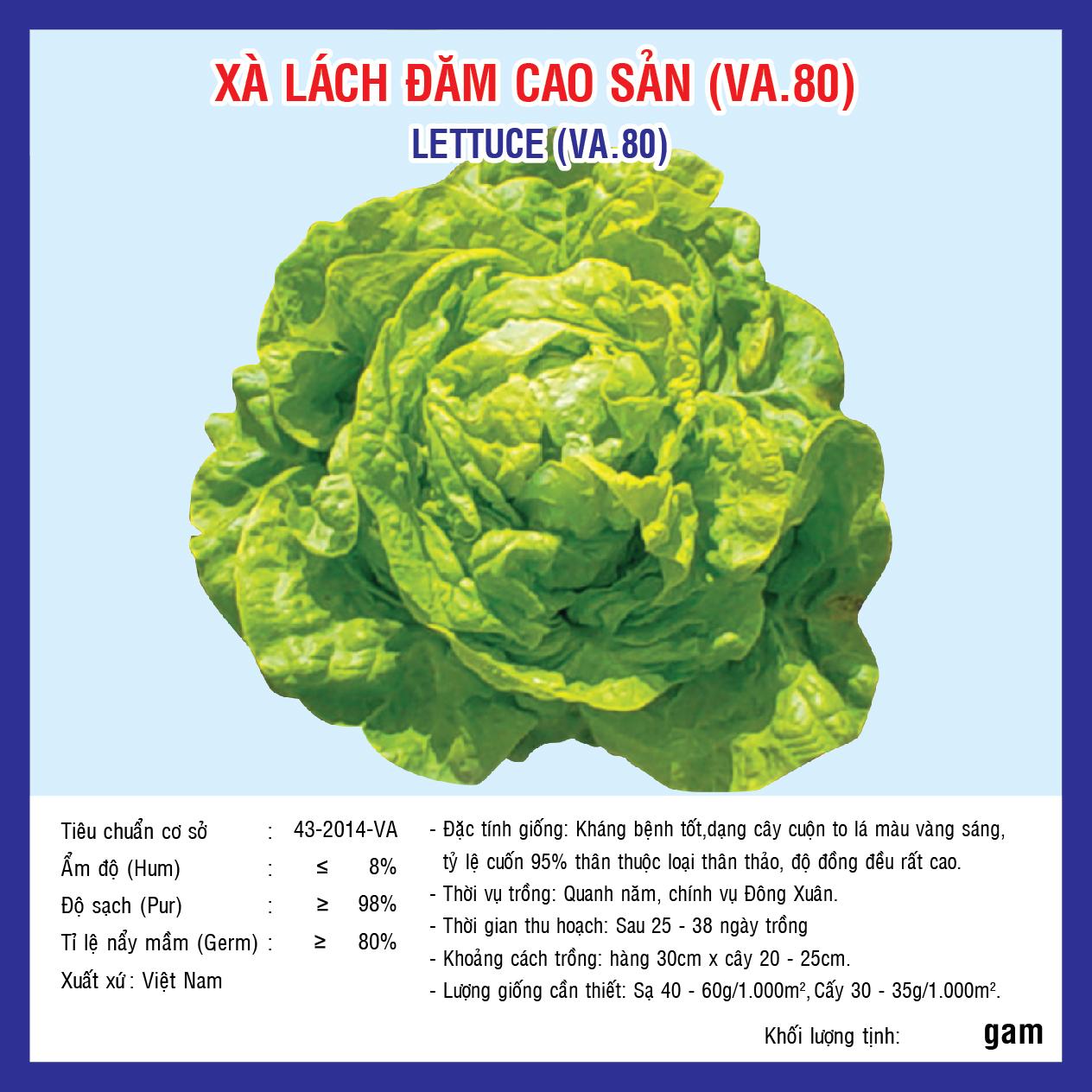 XÀ LÁCH ĐĂM CAO SẢN (VA.80) 2gr