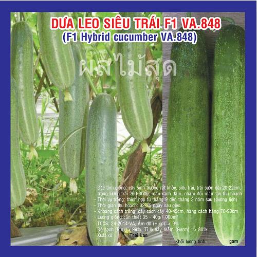 DƯA LEO SIÊU TRÁI F1 (VA.848) 2G