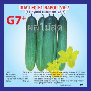DƯA LEO F1 NAPOLI (VA.07) 10G