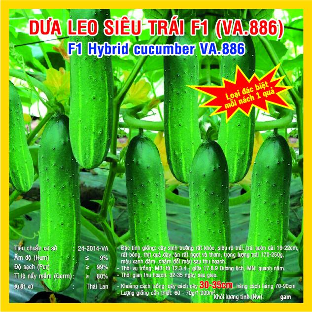 DƯA LEO SIÊU TRÁI F1 (VA.886) 10 GAM
