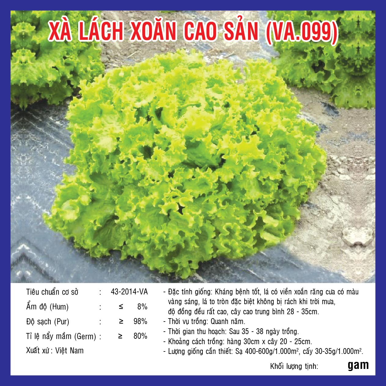 XÀ LÁCH XOĂN CAO SẢN (VA.099) 10GR