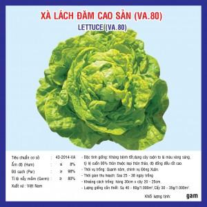 XÀ LÁCH ĐĂM CAO SẢN (VA.80) 10GR