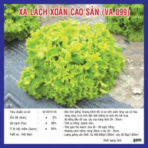 XÀ LÁCH XOĂN CAO SẢN (VA.099) 5GR