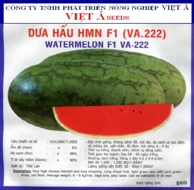 DƯA HẤU HMN F1 (VA.22) 5GR