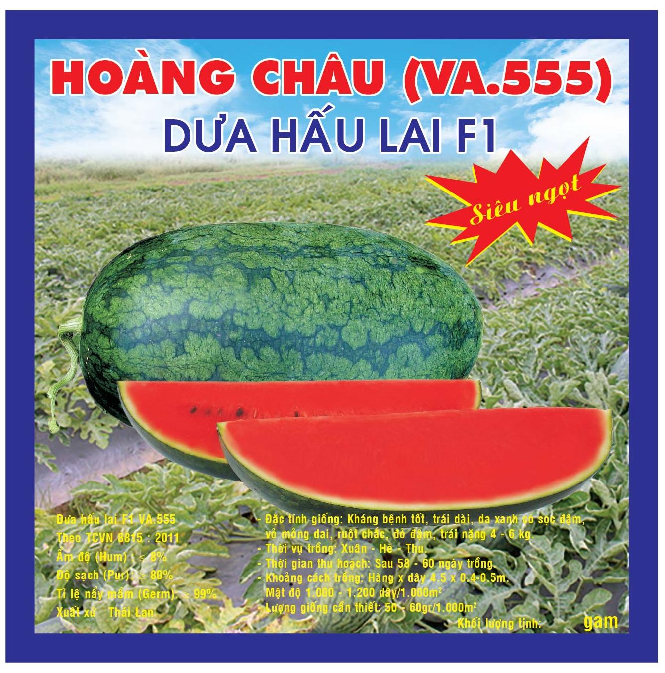DƯA HẤU LAI F1 HOÀNG CHÂU VA555