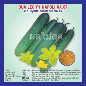 Kỹ thuật trồng dưa leo xanh