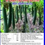 Kỹ thuật trồng bí xanh (Bí xanh đao)