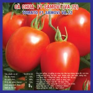 Kỹ thuật trồng cà chua