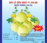 Quy trình kỹ thuật trồng dưa lê siêu ngọt