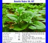 Kỹ thuật trồng rau mồng tơi